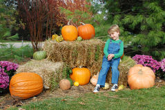 Little boy with big pumpkins. Little smiling boy among Halloween symbols Stock Photos
