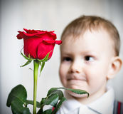 Little boy and the big red rose. Nice little boy with an artful contented face holds the big red rose Stock Photography