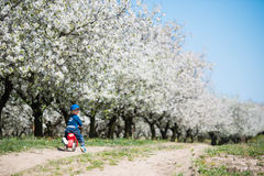 Little boy in blossoming cherry garden Royalty Free Stock Photos