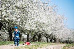 Little boy in blossoming cherry garden Royalty Free Stock Photo