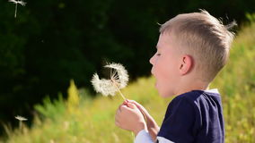 Little boy blow on a big dandelion. The little boy blow on a big dandelion stock video footage