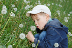 Little boy blowing dandelion. Small boy with a bunch of dandelions stock photos