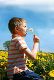 Little boy is blowing dandelion. Little boy is blowing dandelion on meadow full of yellow dandelions by may Stock Images