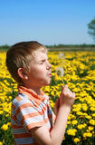 Little boy is blowing dandelion. Little boy is blowing dandelion on meadow full of yellow dandelions by may Royalty Free Stock Image