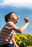 Little boy is blowing dandelion. Little boy is blowing dandelion on meadow full of yellow dandelions by may Royalty Free Stock Photo