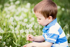 Little boy, blowing dandelion. In a dandelion field Royalty Free Stock Photos
