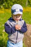 Little Boy Blowing On A Dandelion Flower. Adorable Little Boy Blowing On A Dandelion Flower Royalty Free Stock Image
