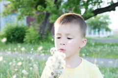 Little boy blowing dandelion flower at summer. Happy smiling child enjoying nature in park. Sun rays Stock Image
