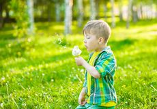 Little boy blowing dandelion seeds royalty free stock photos