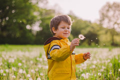 Little boy blowing dandelion. In spring field Stock Images