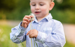 Little boy blowing dandelion. Sunny summer. Cute little boy in blue shirt blowing dandelion. Green sunny summer nature Royalty Free Stock Images