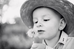 Little boy blowing dandelion. Sunny summer. Face of cute little boy blowing dandelion. Black and white portrait Stock Photo
