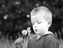 Little Boy blowing dandelions. A cute little boy playing dandelions Royalty Free Stock Photos