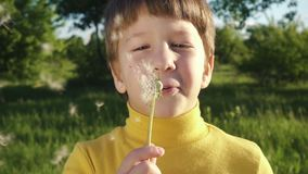 Little boy blowing up the dandelion in the park stock video
