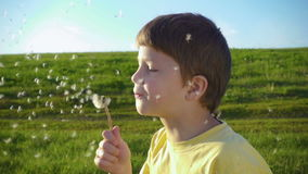 Little boy blowing up the dandelion seeds on green meadow. Slow motion 250 fps stock video