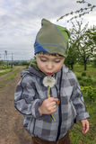 Little boy blows at the dandelion Stock Image