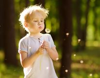 Free Little Boy Blows Down Dandelion Fluff. Making A Wish Stock Photos - 137356423
