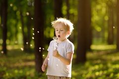 Little boy blows down dandelion fluff. Making a wish. Kids`s fun in the summer outdoors royalty free stock image