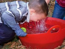 Little Boy Bobbing For Apples. This 5 year old little boy is bobbing for apples in a red tub of water with water running off his face Royalty Free Stock Images