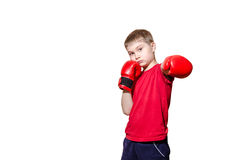 Little boy in boxing gloves on a white background Stock Image