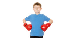 Little boy in boxing gloves on a white background Royalty Free Stock Photos