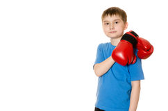 Little boy in boxing gloves on a white background Stock Photography
