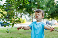 Little boy with branch at park Royalty Free Stock Photography