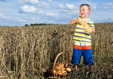 Little boy with bread in a cornfield Royalty Free Stock Images