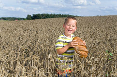 Little boy with a bread in a cornfield Royalty Free Stock Photo