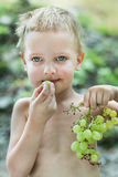 Little boy with brush of grapes Royalty Free Stock Image