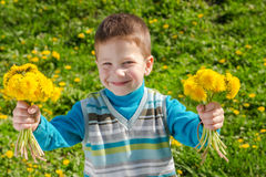 Little boy with bunch of dandelions Stock Image