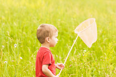 Little boy with a butterfly net on a summer meadow Royalty Free Stock Photos
