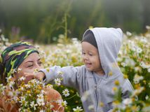 Little boy on the camomile meadow Royalty Free Stock Photos