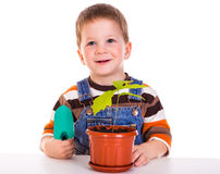 Little boy care plant in a pot Royalty Free Stock Photo
