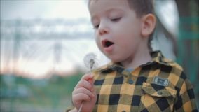 Little Boy Carefree Blowing a Dandelion Outdoors on a Sunset. Concept of Happy Carefree Childhood. Slow Motion Close-Up Shot of Cute Little Boy Carefree Blowing stock footage