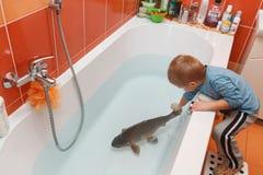 Little boy and carp in the bathtub. Stock Photos