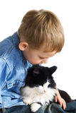 Little boy and cat royalty free stock images