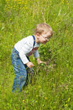 Little boy catches grasshoppers in a grass Royalty Free Stock Photography