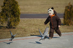 Little boy catching and playing with pigeons Royalty Free Stock Photo