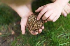 Little Boy che gioca il rospo americano comune della tenuta esterna Fotografia Stock