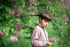 A little boy, and cherry blossoms Stock Images