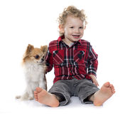 Little boy and chihuahua Stock Images