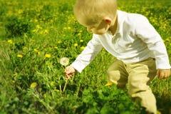 Little boy child with dandelion flower in summer Stock Photos