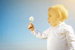 Little boy child with dandelion flower in summer Royalty Free Stock Photography