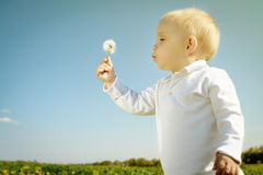 Little boy child with dandelion flower in summer Royalty Free Stock Photos