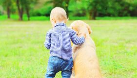 Little boy child and Golden Retriever dog together outdoors. Back view, summer park royalty free stock image