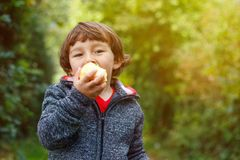 Little boy child kid eating apple fruit autumn fall copyspace ga. Rden nature outdoors stock photos
