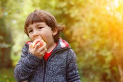 Little boy child kid eating apple fruit autumn fall copyspace na Stock Photography