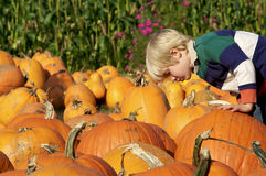 Little Boy choosing a Pumpkin Royalty Free Stock Image
