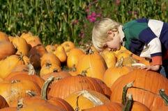 Little Boy choosing a Pumpkin. Cute young boy looking at a pumpkin at the pumpkin patch Royalty Free Stock Image